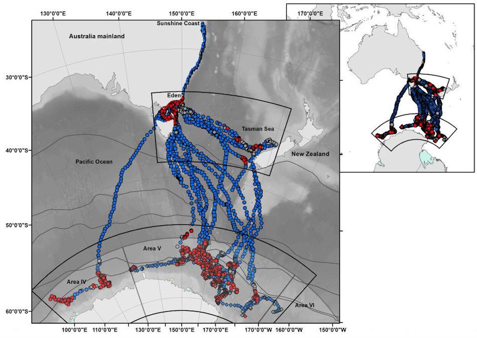 Die Karte zeigt die Routen, die von den markierten Buckelwalen eingeschlagen worden waren. Blau sind die Wanderungen, rot die Orte, an denen die Tiere gefressen hatten. Alle Buckelwale starteten ihre Wanderungen an der Küste von Queensland. Bild: Australian Antarctic Division