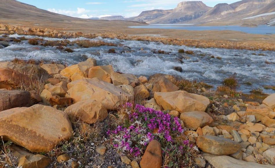 """Die Insel Ellesmere liegt im äussersten Norden des kanadischen Arktis-Archipels. Die Insel ist fast 5-mal grösser als die Schweiz und stark vergletschert. Von den Inuit wird sie """"Land der Moschusochsen"""" genannt und gilt als Kältewüste mit wenig Niederschlag aber reicher Tundra. Bild: Paul Gierszewski / Wikipedia"""