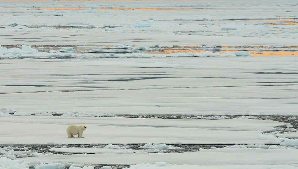 Eisbaer auf dem Eis